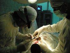 Пересадка лица, пластическая хирургия, трансплантация